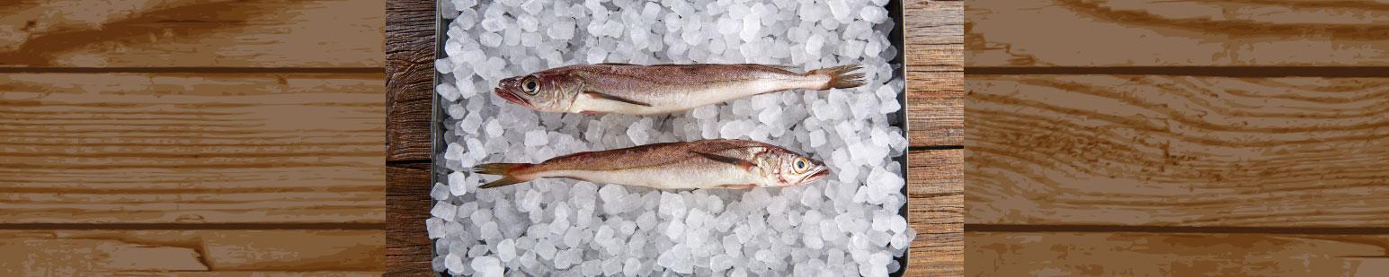pescado-salvaje-america-altida-trade